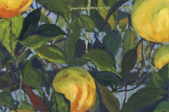 171.-Madeiran-Lemons